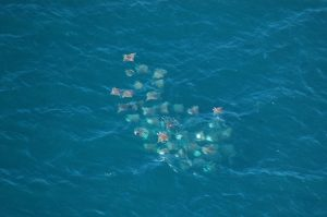 Alianza Keloni A.C. Protecting Marine Life