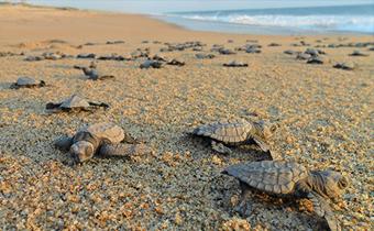 La Duna Ecology Center La Paz Baja California Sur turtle protection monitoring
